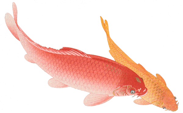 Painting of two koi, one red and one orange, swimming together towards freedom